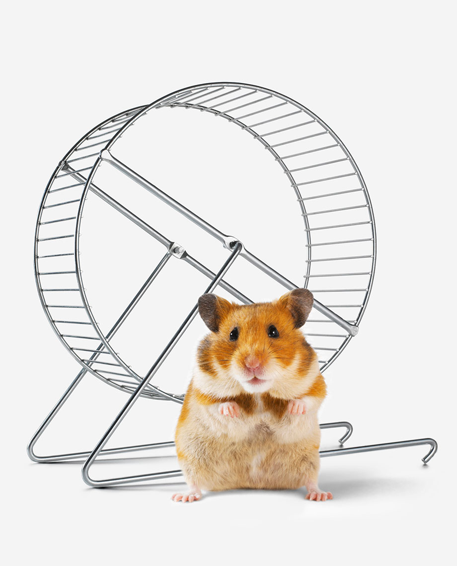 Barclays_Hamster