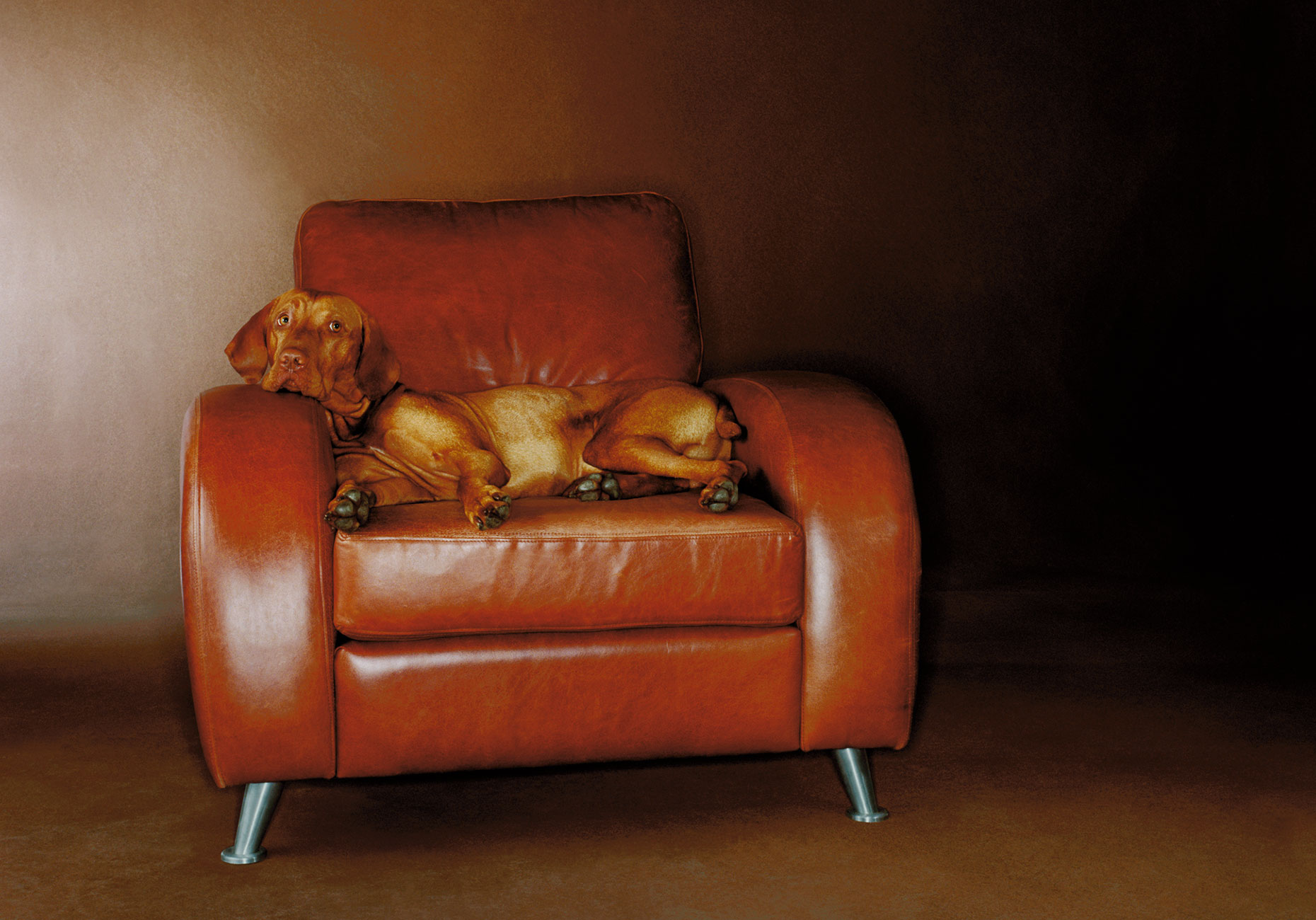 Dog-on-chair